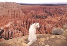 25张可爱的狗狗户外摄影照片