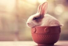 18张超级可爱的兔子摄影照片