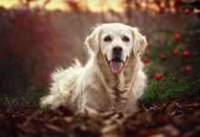 狗狗享受圣诞时光的美丽照片