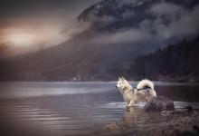 来看看汪星人在奥地利森林的写真集