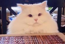 流浪猫Kitten被网友发现之后