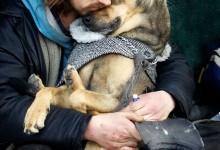 15张流浪人和狗狗的治愈系摄影
