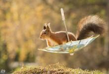 18张萌萌的可爱的松鼠摄影照片