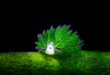20张奇妙的海蛞蝓摄影