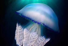 超级迷人的近距离水母摄影