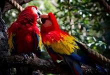14张有爱的动物接吻摄影