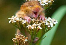 """27张""""微笑的动物""""的温暖摄影"""