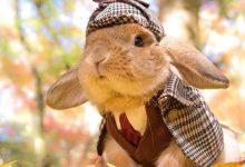 萌宠PuiPui,世界上最时尚的兔纸