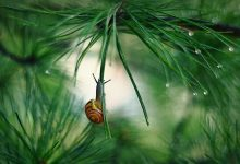 14张关于蜗牛的摄影照片