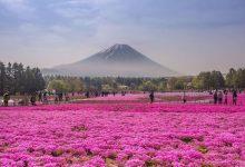 20张图告诉你为什么去日本