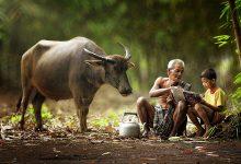 印尼村庄田园生活的摄影欣赏