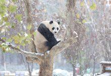 14张重点保护的珍惜动物摄影照片