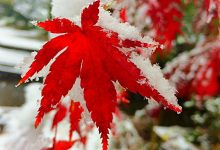 25张迷人的东京雪景摄影照片