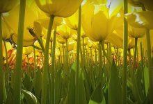 10张美轮美奂的自然摄影照片