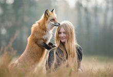 29张可爱的狐狸与摄影师的摄影照片