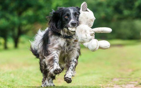 18张关于狗狗的优秀摄影照片欣赏